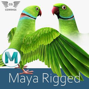 3D model parrot stylized