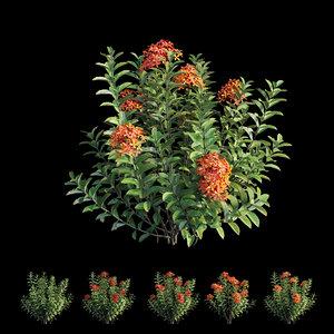 3D ixora plant set 09