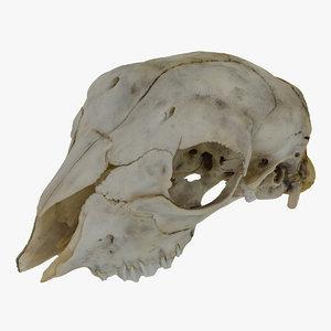 sheep baby ovis aries 3D model