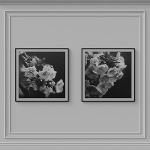 decorative photoframes film frames 3D model
