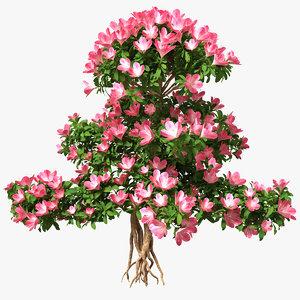 3D bonsai tree flowers model