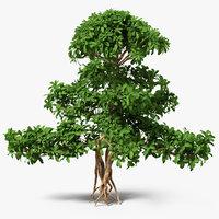 Small Bonsai Green Tree