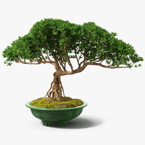3D small bonsai pot