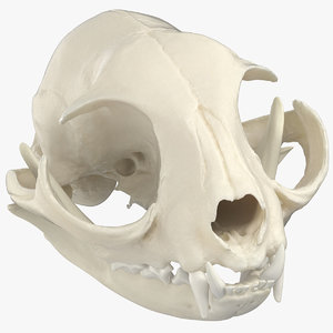 3D domestic cat skull jaw