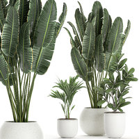 Plants in a white pot for the interior 659