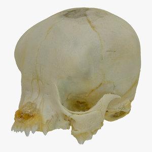 pug baby skull 01 3D model