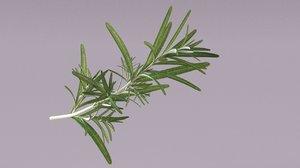 rosemary fresh herbal 3D model