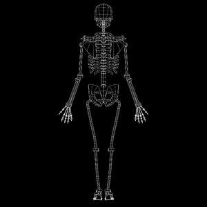 3D skeleton synovial joints model