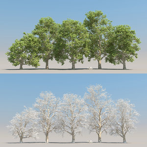 5 platanus tree leaves 3D model