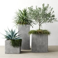 Outdoor Plants Set In Pottery Barn Planters
