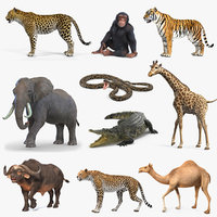 Rigged African Animals Collection 7 for Cinema 4D