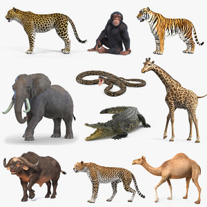 3D rigged african animals 7 model