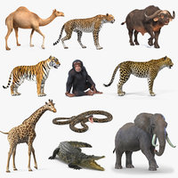 Rigged African Animals Collection 7 for Maya