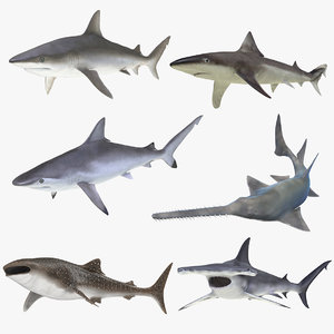 rigged sharks 7 3D model