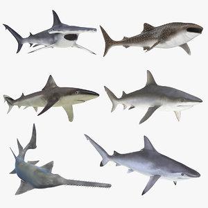 3D rigged sharks 7 model