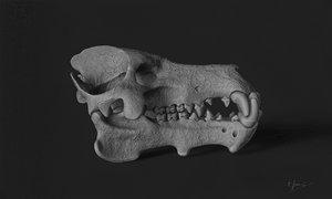 daeodon shoshonensis skull 3D model