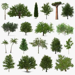 summer trees 8 3D model