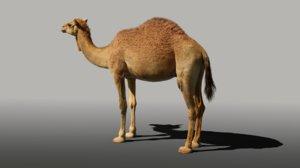 camel fur 3D model