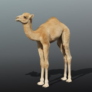 camel rigging baby model