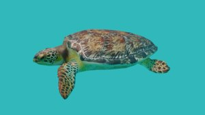 3D turtle sea model