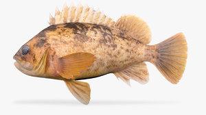 grass rockfish light version model