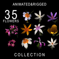 ANIMATED FLOWERS COLLECTION(1)