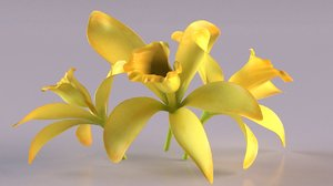 3D model vanilla orchid flower