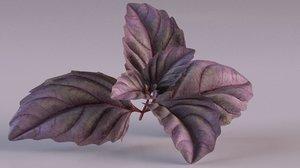 basil plant spice leaf 3D model
