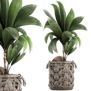 decorative cocos nucifera interior 3D model