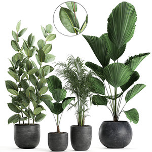 3D model plants black