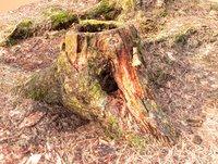 Tree Stumps 16k