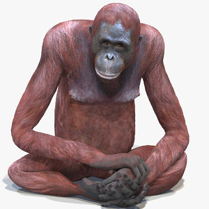 orangutan female rigged animations model