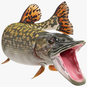pike fish rigged 3D model