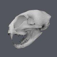 Cat Skull Base Mesh