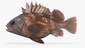 gopher rockfish fish 3D model