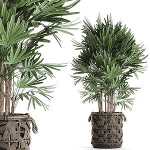 decorative palm tree interior model