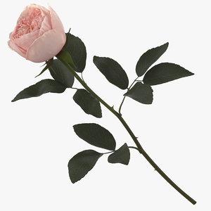 3D model garden rose