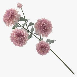 3D dahlia nature flower model