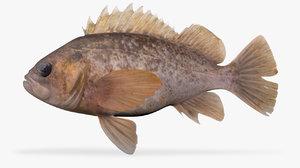 grass fish 3D model