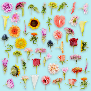 25 flower 3D model