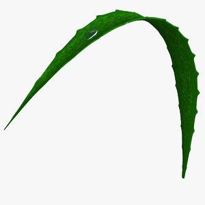 3D model aloe vera petal plant