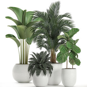 3D ornamental plants white model