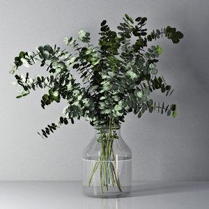 eucalyptus flowers plant model