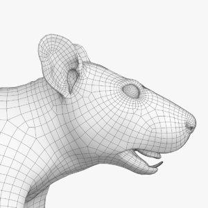 rat mesh 3D