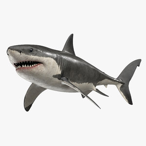 rigged great white shark 3D