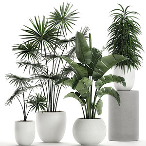 plants white potted model