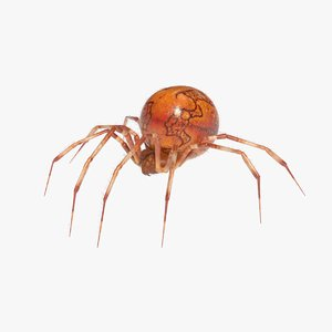 orb weaver spider 3D model