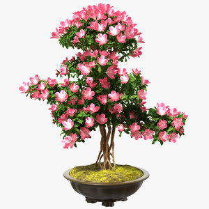 3D model small bonsai tree flowers