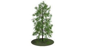 big tree 3D