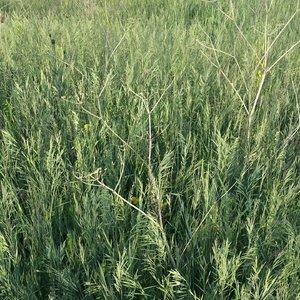 grass weeds flowers model